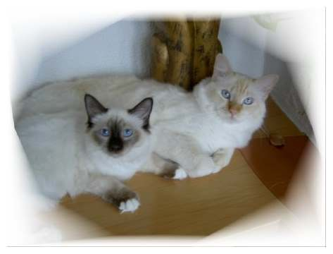 Magnetic Cats Kissme alias Lilly mit Sandy